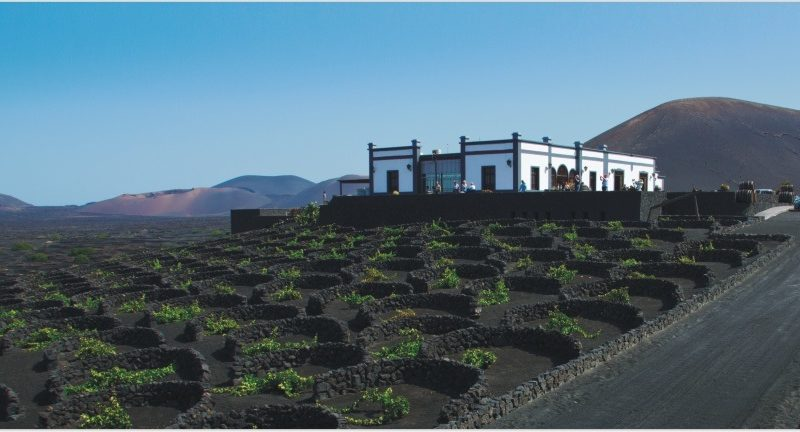 Lanzarote et ses vignes