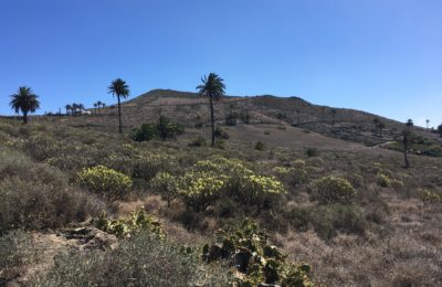Land Haría Lanzarote